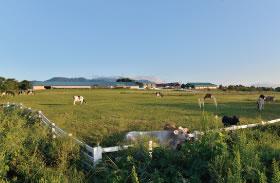 くろべ牧場へのアクセス