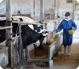 育成・搾乳牛舎