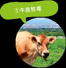 ①牛放牧場