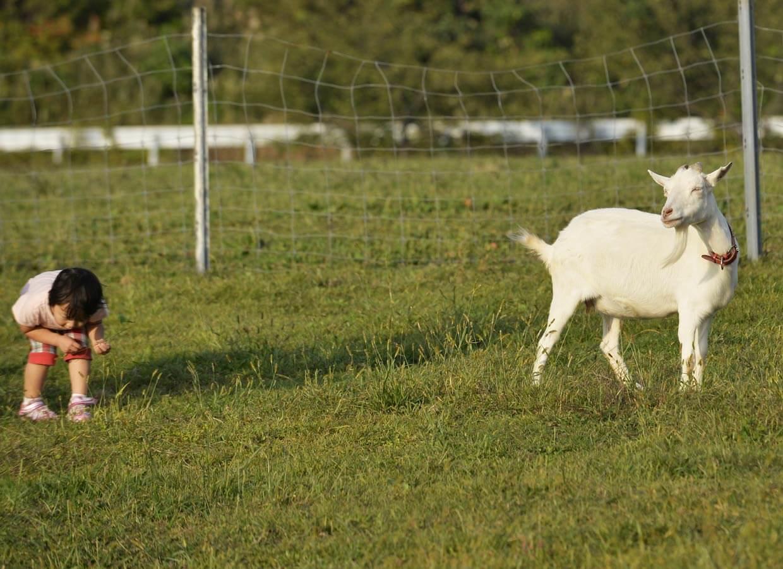 くろべ牧場のヤギさん