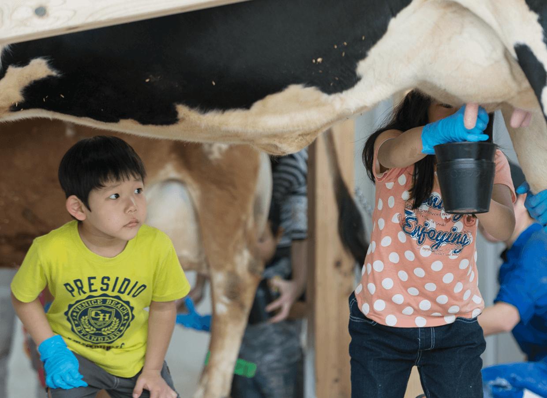 ミルク絞り体験